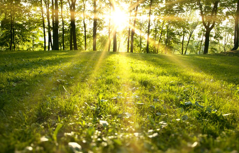 Wellbeing in Spring - Yarrow Wolfe